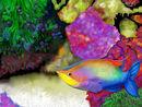 fish-under-water