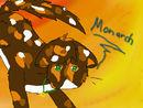 monarch-contest