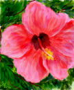 hibiscus-flower